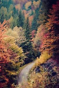 trees Halloween fall colorful scenery autumn seasonal ...