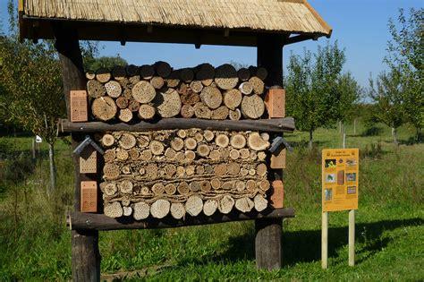 insektenhotel selber machen insektenhotel selbst bauen tipps und tricks lbv