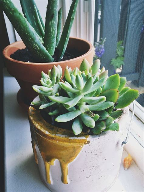 Best Windowsill Plants by 317 Best Windowsill Plants Images On