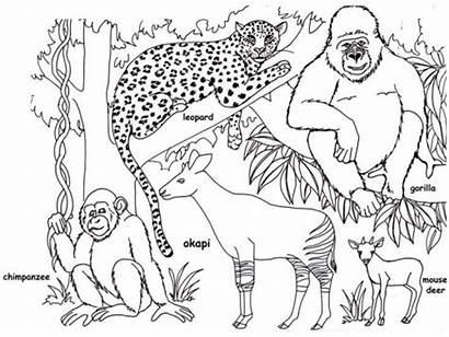 Jungle Coloring Pages Rainforest Animals Printable Safari