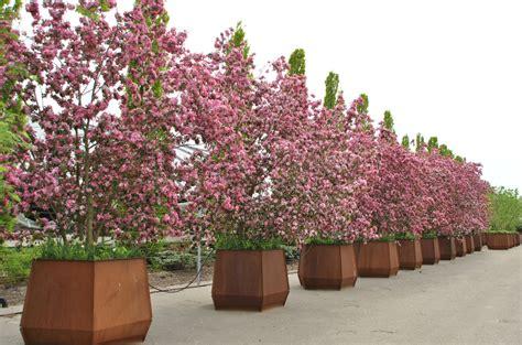 arbres en bacs une solution pratique pour la verdure en