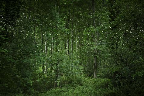 ellie davies creates forest landscapes illuminated