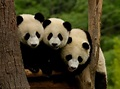 37 Cutest Animal Families on the Planet – Page 8 – Viral Smoke