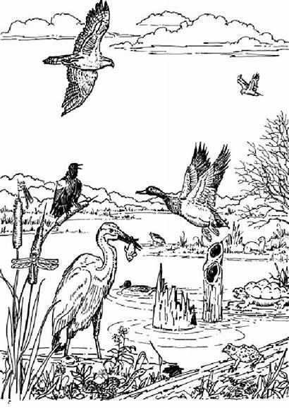 Wetland Coloring Pages Animal Wetlands Animals Wildlife