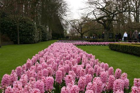 Botanischer Garten Berlin Größte Blume Der Welt by Willi S Travelpage Bester Garten Der Welt