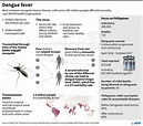 Factfile on dengue fever and the child vaccine scandal in ...