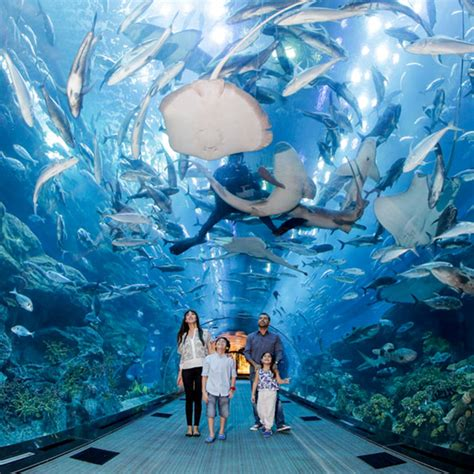 best aquariums in the world 5 best aquariums in the world that you to sea buro 24 7