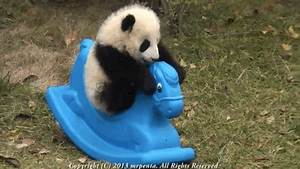 Baby Pandas Overcoming Obstacles To Help You With The Rest ...