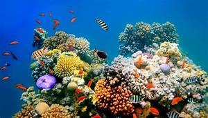 Description of the Four Types of Aquatic Ecosystems ...  Aquatic