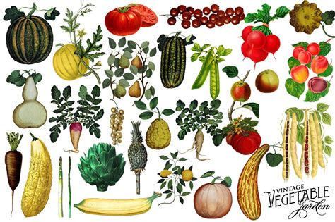 vegetables design vintage botanical vegetable graphics avalon rose design