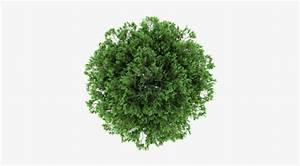 Tree, Plan, Vector, Free, Download, At, Vectorified, Com