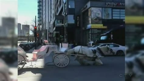Horse And Car Collide In Montreal, Activists Call For Coffee Maker Xq626-wt Bean Roasting Machine Makers Single Cup Plaza Indonesia Machines Za Roaster Rocket Uk