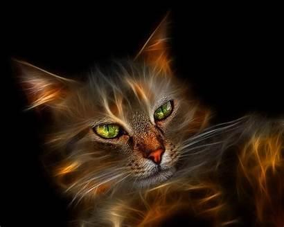 Pretty Kitty Cats Fanpop Cat Wallpapers Eyes