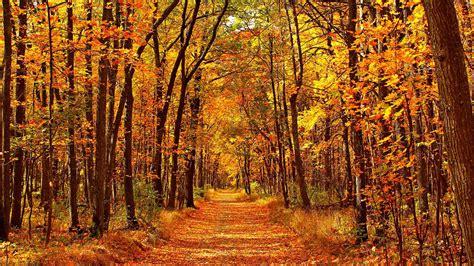autumn  set   warmer   bayradio