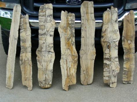 spalted wood woodworking talk woodworkers forum