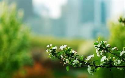 Elegant Background Nature Flowers Macro Desktop Wallpapers