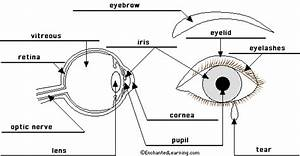 Picture Front Of The Eye Without Labels Clipart