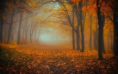 Forest Autumn Fog Foliage Widescreen Background Wallpapers