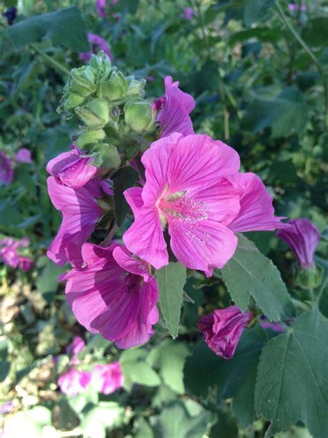 วันอังคารสีชมพู ชวนชมดอกไม้สีชมพู - Pantip