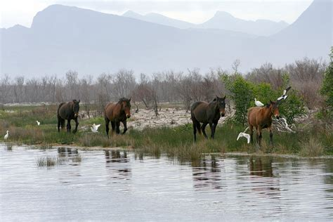horses africa wild south barry deborah hall photograph 5th uploaded june which