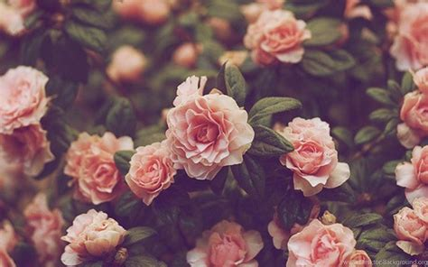 Flowers Wallpapers Tumblr With Quotes – Wallpapers Desktop ...