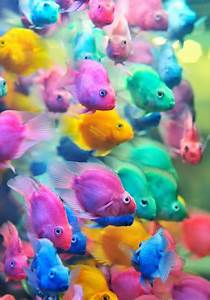 Pics For > Colorful Fish Photos