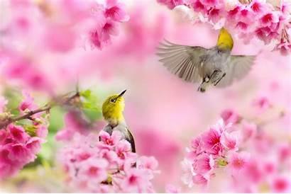 Spring Computer Desktop Nature Birds Wallpapers January