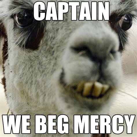Alpaca Meme - alpaca memes www imgkid com the image kid has it