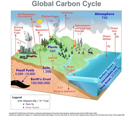 Global Carbon Cycle   Carbon Cycle Design Project