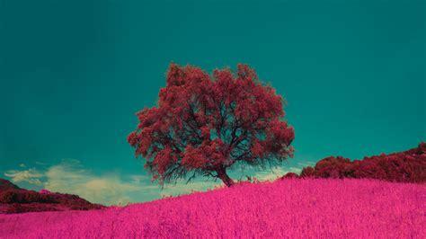 wallpaper  tree pink photoshop grass