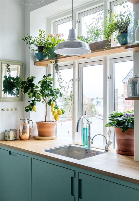 Small Plants For Kitchen Window by Lots Of Windows And Above Kitchen Counter Space