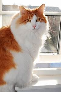 Cat Picture and Information
