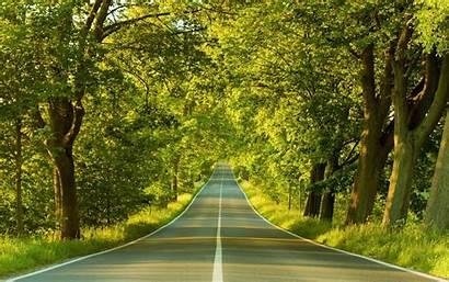 Trees Road Wallpapers Tree Through Ev China