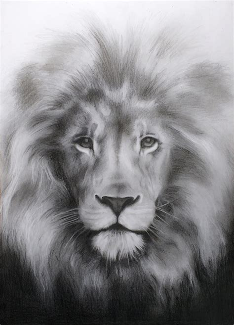 lion drawing   premium design templates