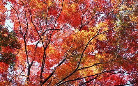 Fall Desktop Backgrounds Autumn Wallpaper by Free Autumn Wallpaper Backgrounds Wallpaper Cave