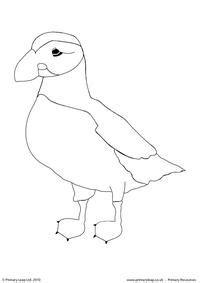 atlantic puffin colouring page