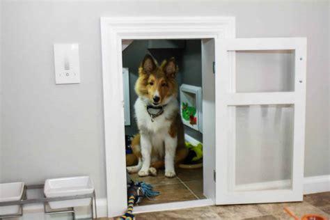 simple steps  creating  room    dog