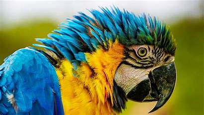 Close Animal Macaw Ara Parrot Colorful Macao