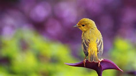 Little Cool Bird Wallpapers Hero