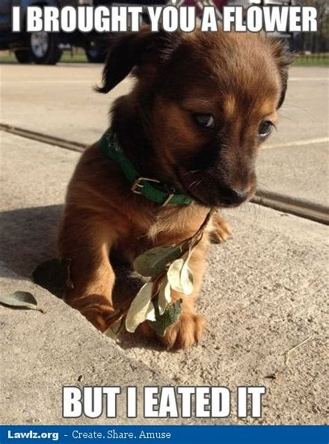 Puppies Memes - puppy meme animals that i love pinterest lol funny count and puppys
