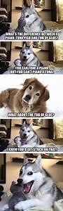 Meme Watch: Pun Dog Isn't Fat, He's Just A Little Husky ...