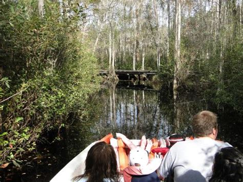Sw Boat Tours Georgia by Boardwalk To Observation Tower Picture Of Okefenokee