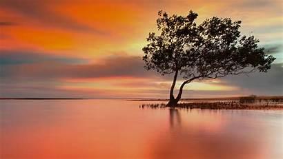 Darwin Australia Sunset Spotlight Mangroves 1080 Escape
