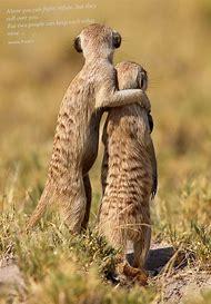 Meerkat Animals