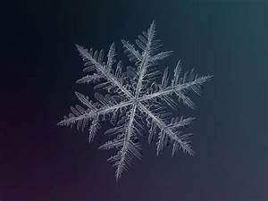 [PHOTOGRAPHY] Snowflakes by Alexey Kljatov - ART FOR YOUR ...