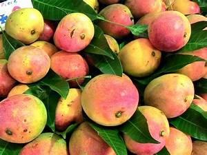 Planter Noyau Mangue : les arbres de mon pays 22 manguier nature ~ Melissatoandfro.com Idées de Décoration