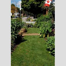Front Yard Vegetable Garden Update!august  The Art Of