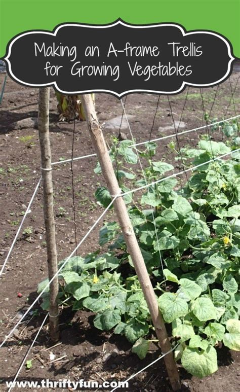 making   frame trellis  growing vegetables thriftyfun