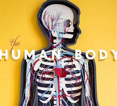 Human Animated Paper Digestive Biology Motion System