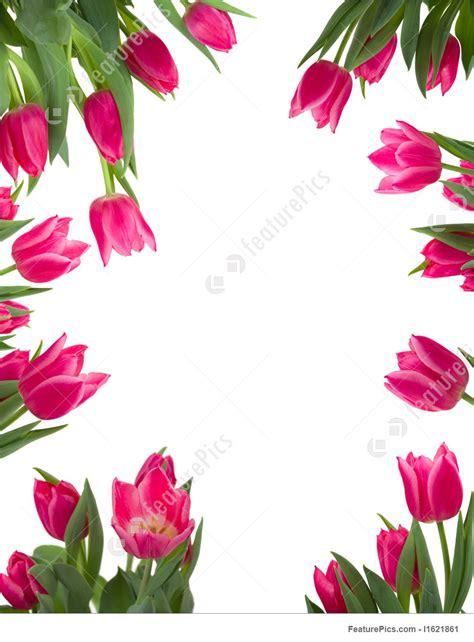 floral frame stock photo   featurepics